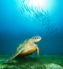 Sea turtle deep underwater