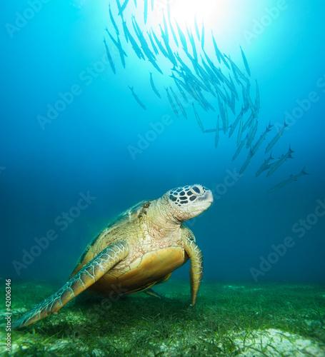 Papiers peints Tortue Sea turtle deep underwater