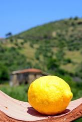 Limone Amalfitana