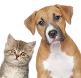 Fototapety Kitten and puppy. Close up portrait