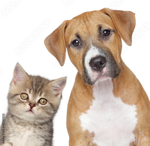 Kotek i szczeniak. Bliska portret