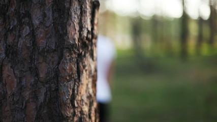 young woman hand and pine tree bark