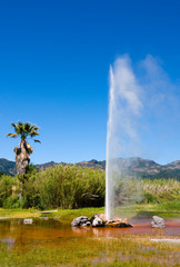 Old Faithful Geyser in Napa Valley, California