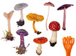 set of isolated different toadstools