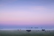 Dutch pasture in fog at sunrise