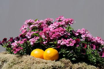 Orangen mit Blumen