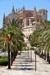"Palmen vor Kathedrale ""La Seu"""