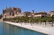 """Palmen und Kathedrale """"La Seu"""""""