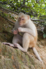 A wild silly albino macaque in the country park of Hong Kong