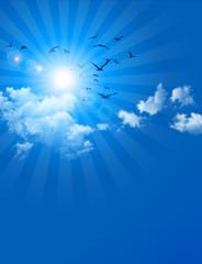 birds in blue sky