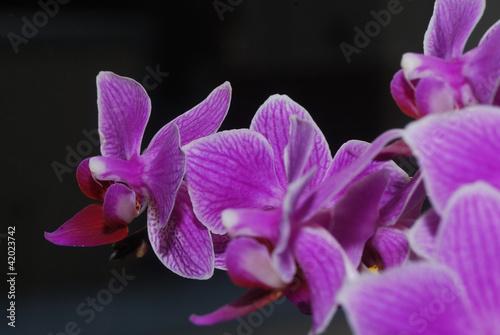 Fototapeten,orchidee,blume,weiß,natur