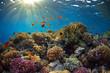 Coral reef - 42028571