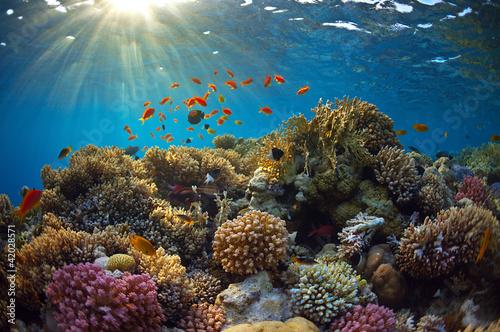 Fotobehang Koraalriffen Coral reef