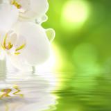 Fototapety orquídea sobre el agua