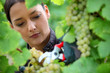Woman pruning grape vine