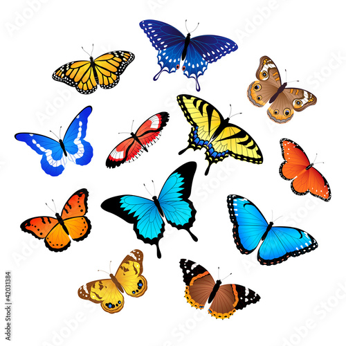 Poster Vlinders Collection of butterflies