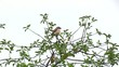 Bird robin on a tree branch