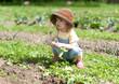 Kind kauert im Gemüsebeet