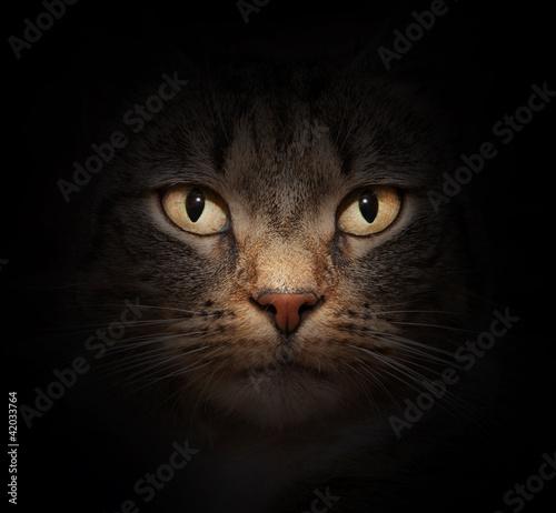 twarz-kota-z-tajemniczymi-pieknymi-oczami-na-czarno