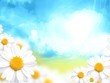 sunny blue background with daisy flowers