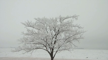 Solitaire Frosty White Tree (Flocked)