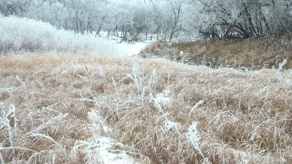 White River Trees with Brown Grass in Winter