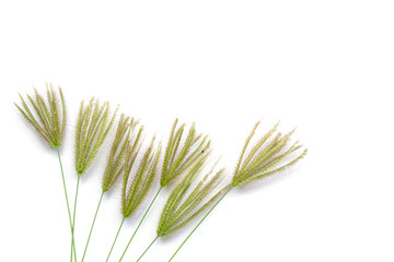 grass flowers isolated on white background
