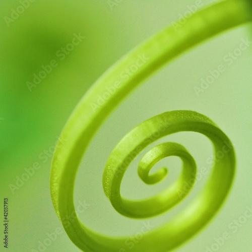Foto op Plexiglas Spiraal Natürlichkeit