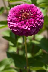 fiori 1454