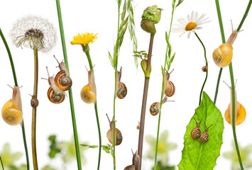 Pastoral composition of flowers and Garden snails