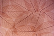 Brown transparent leaves paper background for decoration