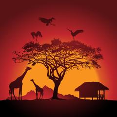 African sunset