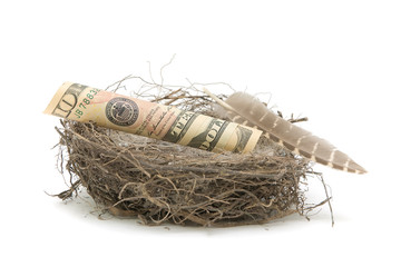 Money in the bird's nest on a white background