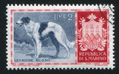 Russian greyhound