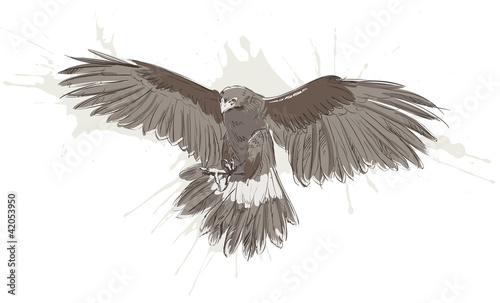 Vector sketch of the eagle