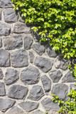 Fototapety Halb Steinmauer - Halb Pflanze vertikal