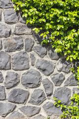 Halb Steinmauer - Halb Pflanze vertikal