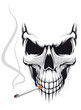 Skull with cigarette