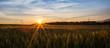 Wheat Field and Sunrise