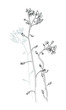 Vector a monochrome sketch of wildflowers forget-me