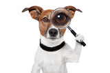 searching dog with magnifying glass - Fine Art prints