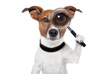 """Постер, картина, фотообои """"searching dog with magnifying glass"""""""