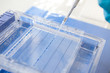 loading a sample into a gel for electrophoresis