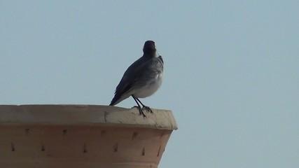 video vogel auf schale I