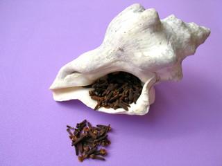 Conch or triton shell & spice