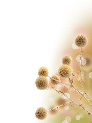 Background with dried prickly plant