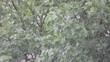 Baum im Regen