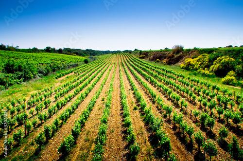 Vignes Costières - 42076121