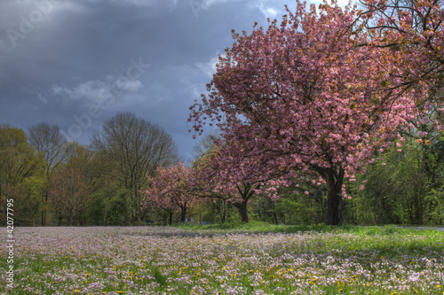 Meadow landscape with cherry blossom