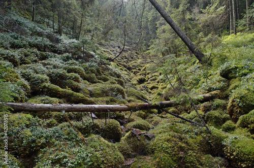 europejski-las-deszczowy